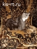 Отдам в добрые руки красивых, ласковых котят. К лотку приучены. Черный - кот. Серая - кошечка. Доставим по городу и району. Тел.89539764140
